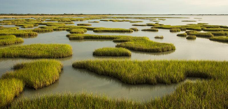 Texas Coastal Prairie wetlands